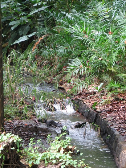 A stream at the Pamplemousse Gardens in Mauritius.
