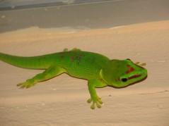 A green lizard.