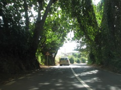 A road view in Mauritius.