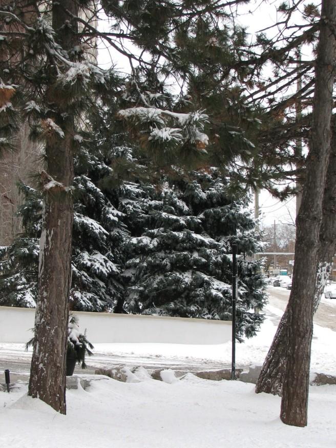 A Winter Scene (3). © Colline Kook-Chun, 2012