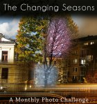 thechangingseasons challenge