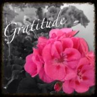 Why I Gratitude