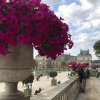 Square in September: Pink Blooms in Luxembourg